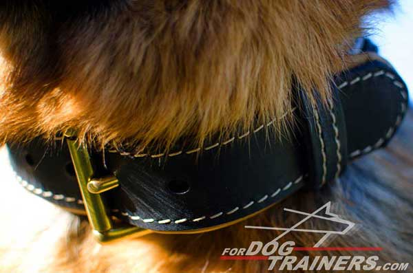 Buckle Made of Brass Guarantees Correct and Comfy Fit of The Collar