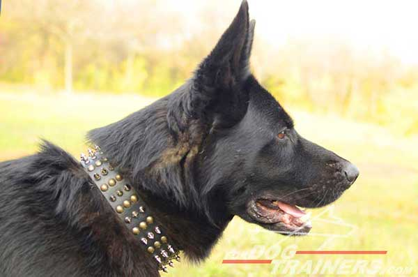 Leather Dog Collar Spiked Studded for Showing German Shepherd To Advantage