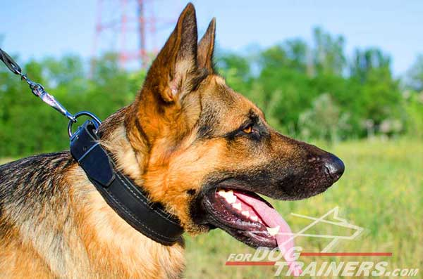 Leather German Shepherd Collar with Felt Padding for Safe Training