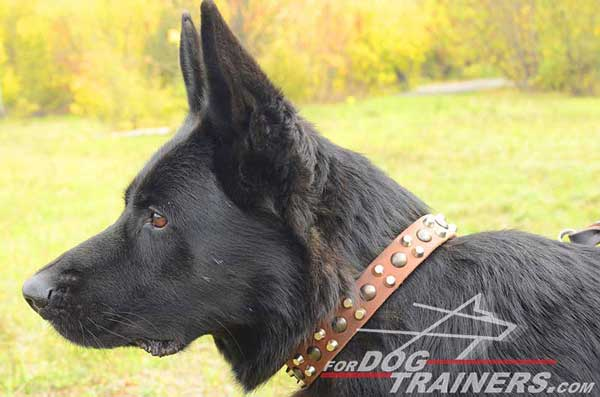 Studded And Spiked Dog Collar Leather Quality for German Shepherd's Walking In The Street