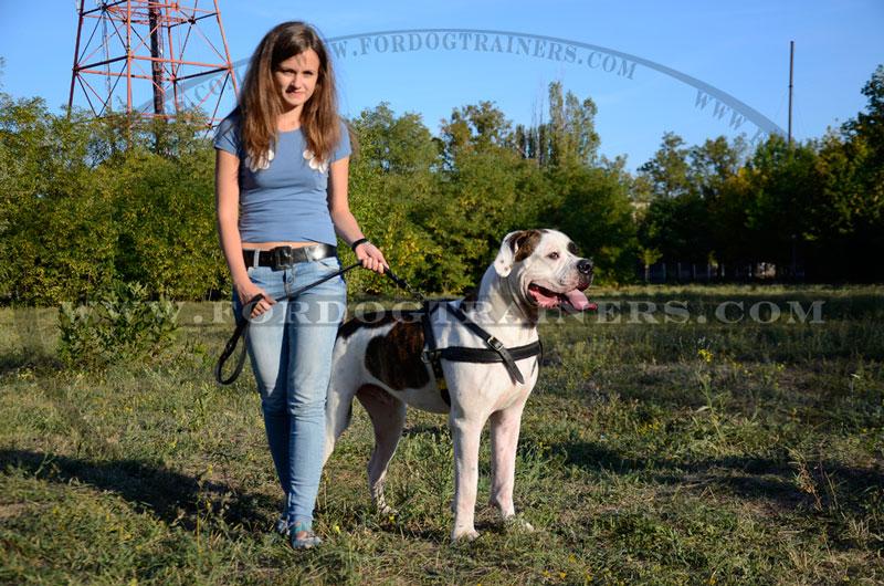 Tracking Pulling Agitation Leather Dog Harness For