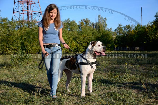 Pulling dog harness with rings for American Bulldog breed