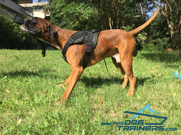 All-Weather Boxer Harness with Padded Chest Plate for Service Dogs