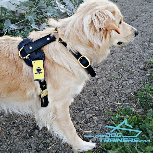 Golden Retriever Harness with Quick Release Buckle