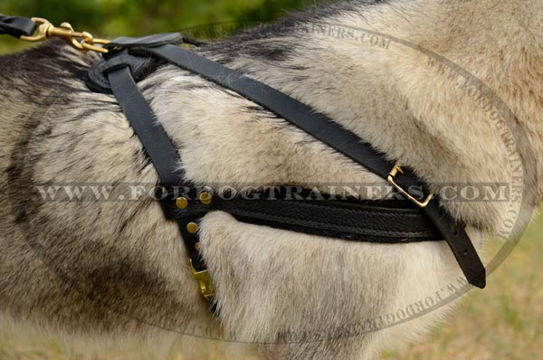 Leather Dog Harness for Malamute Breed