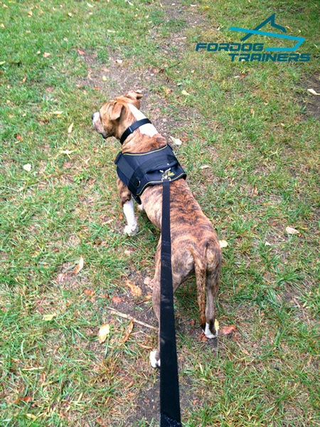 All-Weather Pitbull Harness with Padded Chest Plate