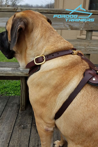 Full Grain Leather Mastiff Harness for Daily Training