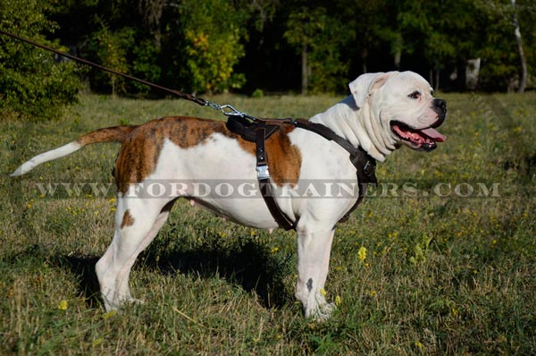 Pure leather dog harness for pro training