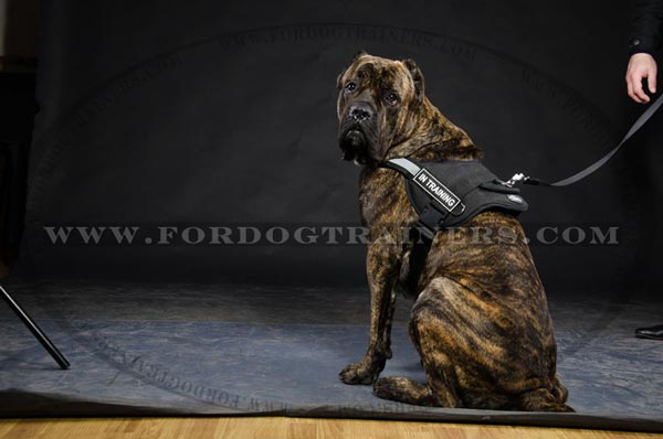 Any weather Cane Corso Nylon Dog harness