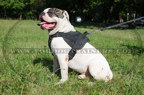 Nylon dog harness for American Bulldog Breed