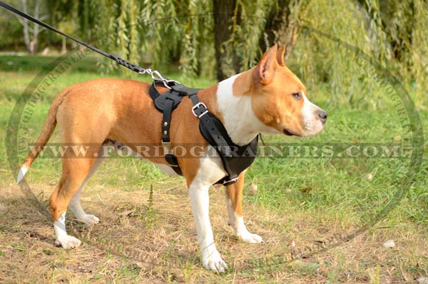 Easy Adjustable Leather Canine Harness for Attack Work