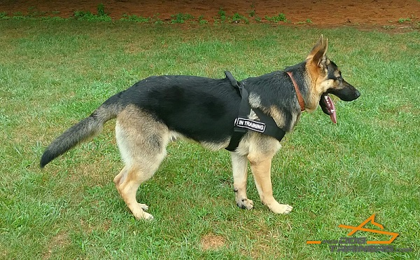 Better Control Nylon Harness - The Best for German Shepherd TRaining