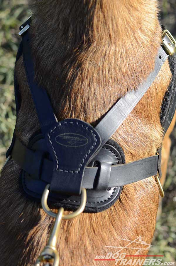 Back Plate and D-ring of Leather Belgian Malinois Harness