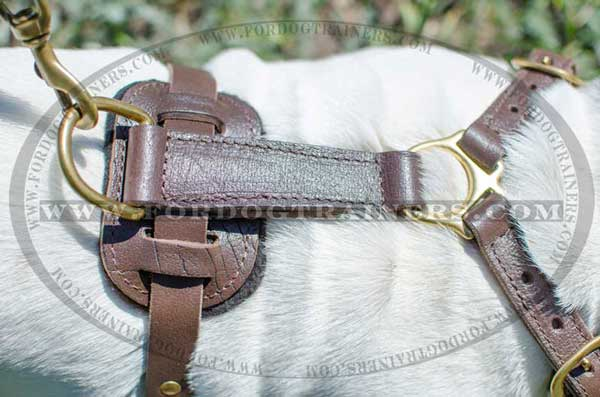 Sturdy Brass Fittings of Leather English Bulldog Harness