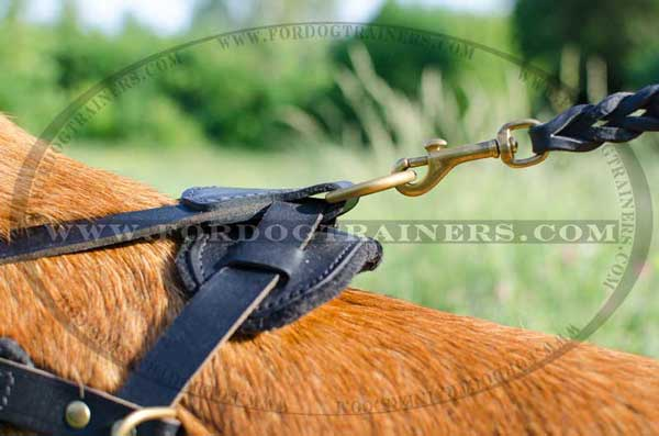 Strong Back Plate of Leather Belgian Malinois Harness