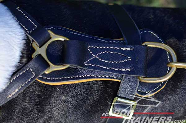Leather Back Plate of Nappa Padded Royal Bull Terrier Harness