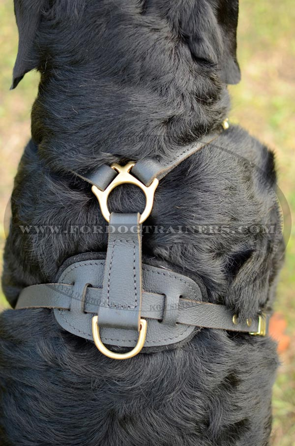 Easy tracking leather harness with non-rubbing back plate
