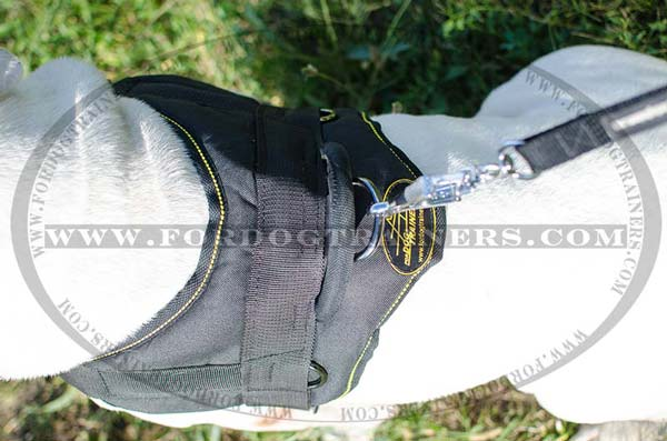 Comfy Back Plate on Nylon Harness