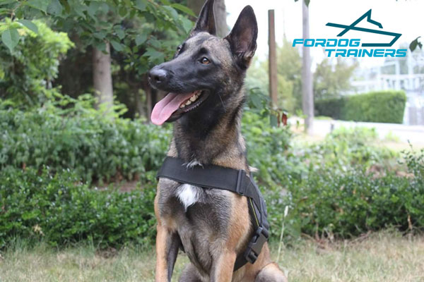 Adjustable Nylon Belgian Malinois Harness for Best Ever Walking and Training