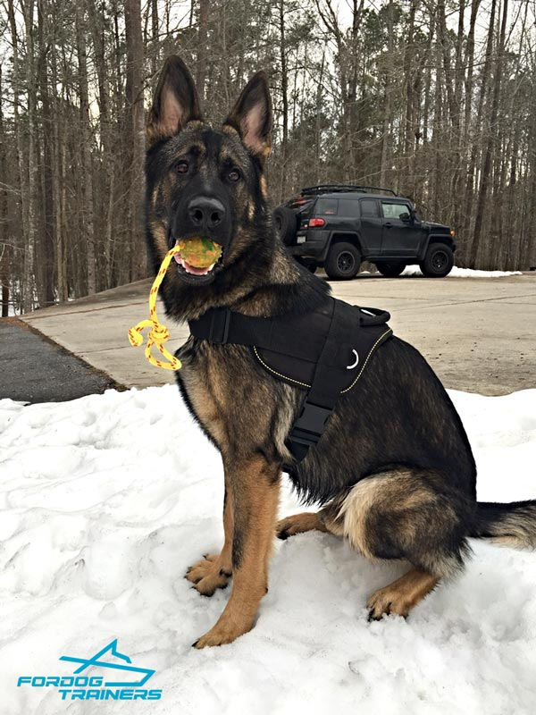Nylon German Shepherd  Multifunctional Dog Harness