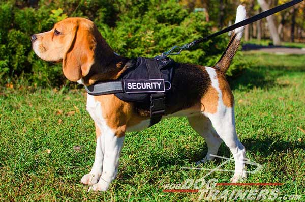 Beagle Breed Standard Dog Supplies