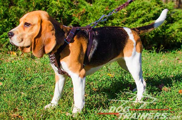 Spiked Padded Brown Leather Dog Harness for Beagles