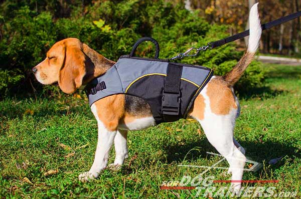 Comfortable Beagle Nylon Vest for Winter and Rehabilitation