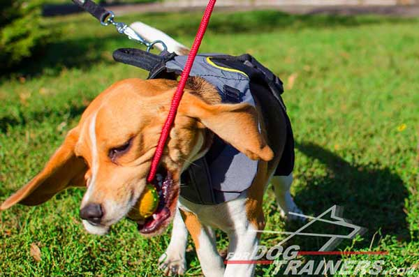Water Resistant Nylon Vest for Beagles