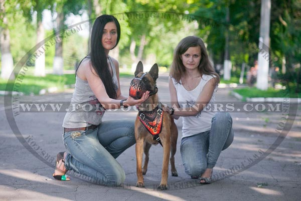Leather Belgian Malinois Harness for Everyday Walking