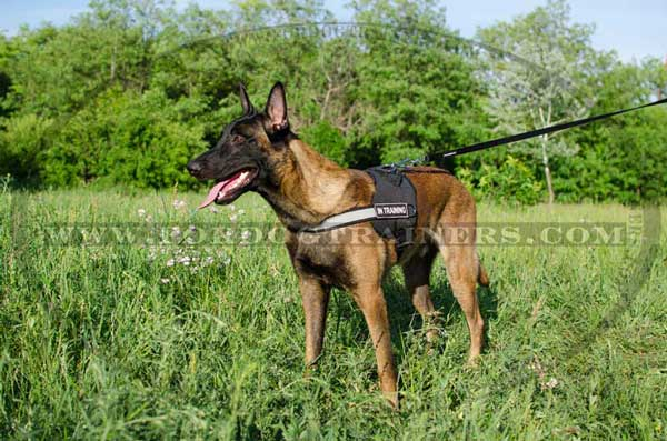 Belgian Balinois Nylon Harness for Dog walking