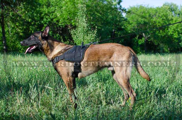 Multipurpose Nylon Belgian Malinois Harness