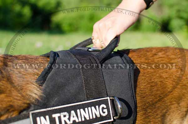Extra strong nylon harness for Malinois