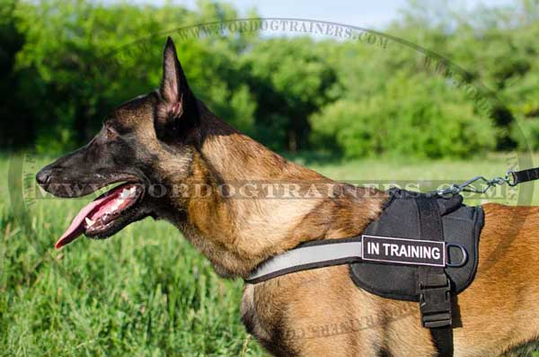 Water-resistant nylon Malinois harness