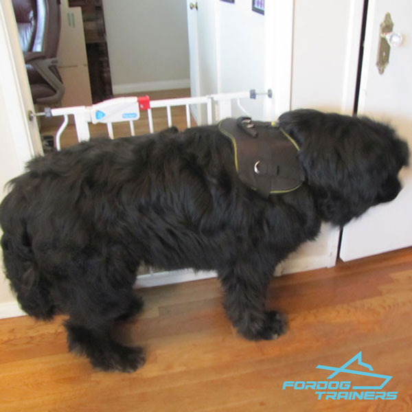 Nylon Newfoundland Harness for Any Activity Your Dog Needs