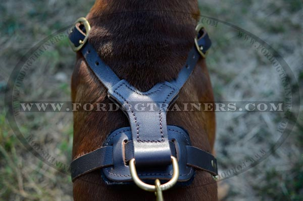 Padded Back Plate with Solid Brass D-ring for the Leash