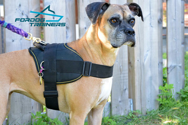 Any Weather Walking and Training in Extra Durable Nylon Boxer Harness