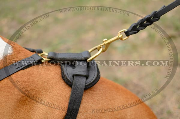 Brass D-Ring on Padded Staffordshire Terrier Harness