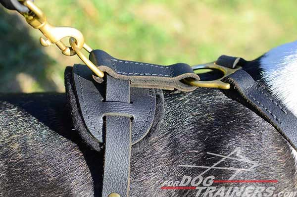 Training Leather Bull Terrier Harness Padded Work Dog Supply