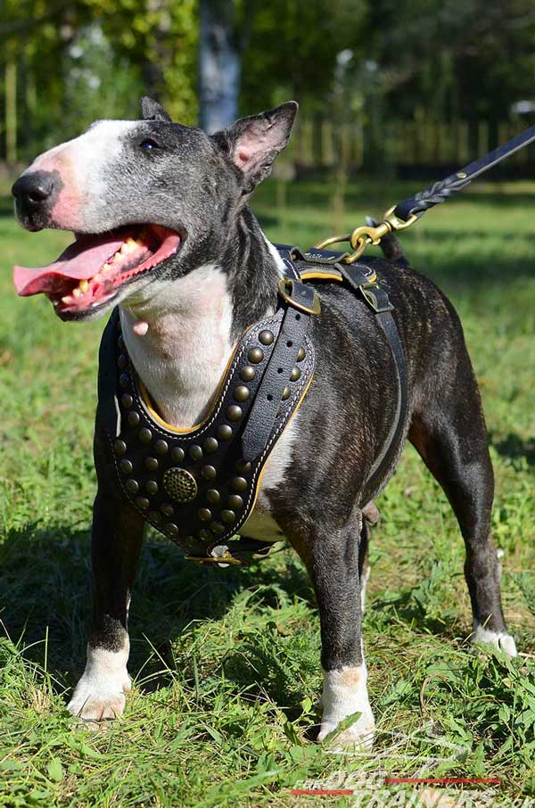 Royal Leather Bull Terrier Harness Stylish Dog Supply