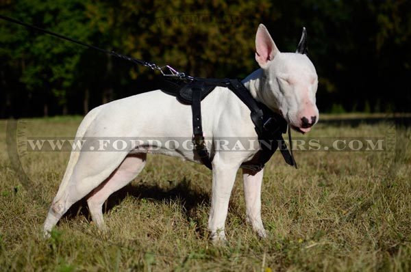 Training Leather Bull Terrier Harness Dog Supply