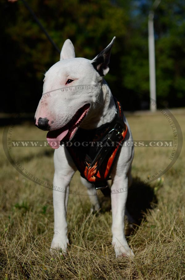 Training Bull Terrier Harness Flames Painted Leather