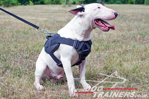 Nylon Dog Harness for Working Dogs