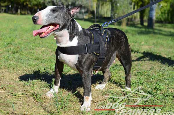 Pulling Training Bull Terrier Harness Nylon