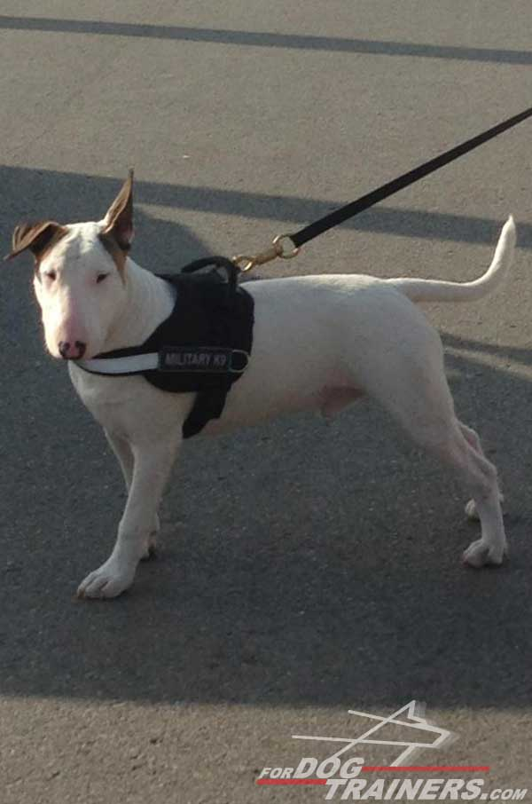 Walking Nylon Bull Terrier Harness Reflective Strap