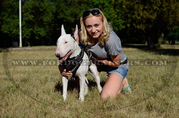 Training Painted Bull Terrier Harness Padded Chest