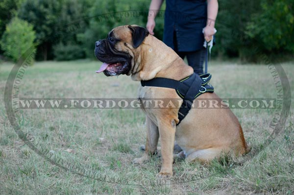 Nylon Dog Harness for pulling