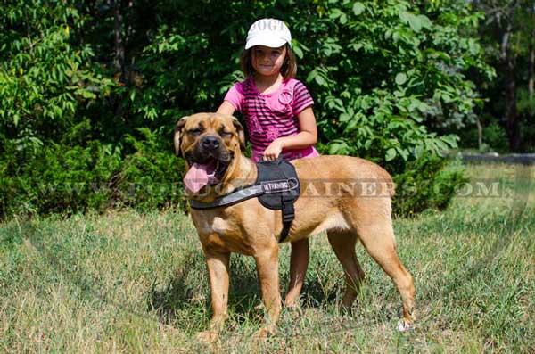 Cane Corso Breed Standard Dog Supplies