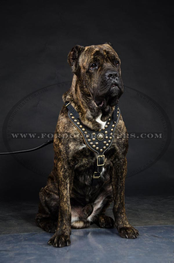 Cane Corso Hand-made Padded dog harness