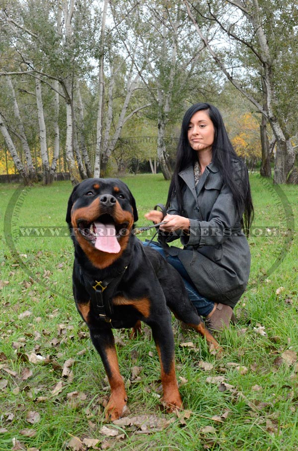 Chic padded dog harness for Rottweiler