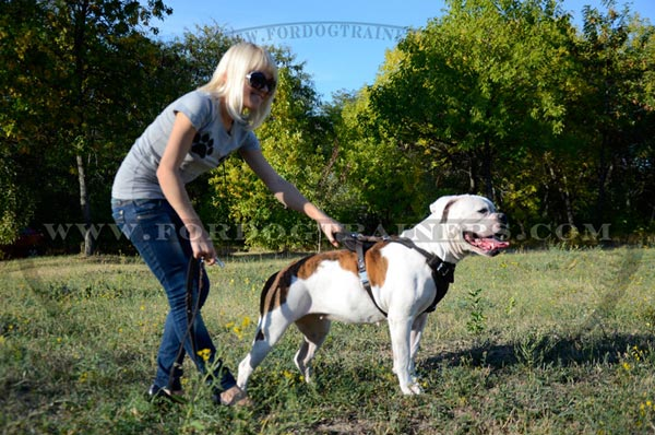 Hand-crafted Leather Dog Harness for American Bulldog